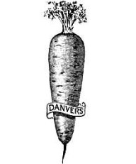 Danvers Carrot Drawing