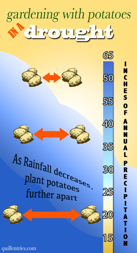 drought potato potatoes gardening spacing organic rainfall