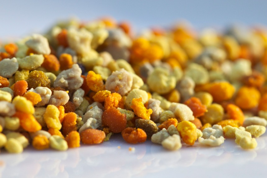 bee pollen macro close up orange honeybee flower